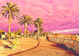 Card Pink Sky And Palm Trees