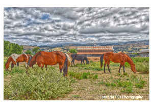 Note Card Horses On A Ranch Photography Concetta