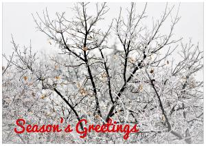 Snowy White Holiday Card