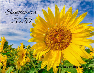 2020 Bright SUNFLOWERS Calendar