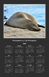 2020 California Sleeping Sea Lion Poster Calendar