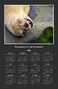 2020 Dreaming Sea Lion Poster Calendar