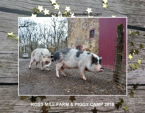 Ross Mill Farm & Piggy Camp 2018