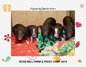 Ross Mill Farm & Piggy Camp's 2019 Calendar
