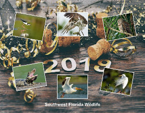 2018 Florida WIldlife