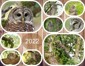 Barred Owls 2018