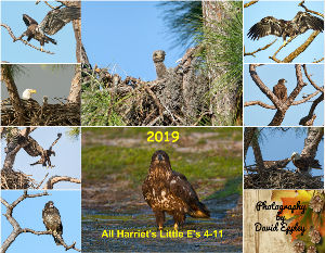 2018 All Harriet's Little E's 4-9