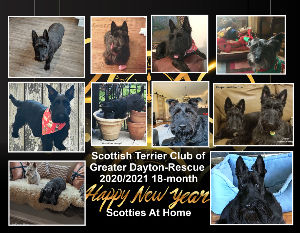 Scottish Terrier Club of Greater Dayton - Rescue