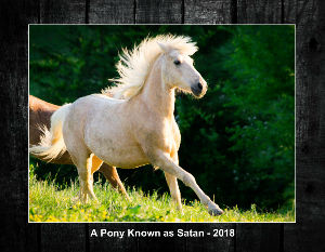 A Pony Known as Satan 2018 Calendar