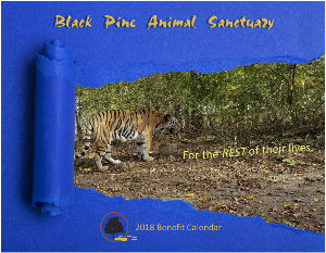 Black Pine 2018 Benefit Wall Calendar