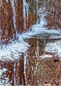 Flooded Bald Hill Trail in Winter