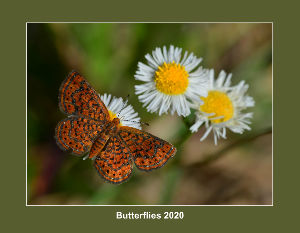 Butterflies 2020 by Edward Perry IV