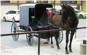 Amish Buggy Poster 1