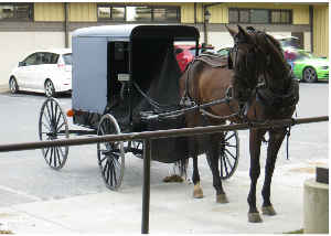 Amish Buggy Card 1
