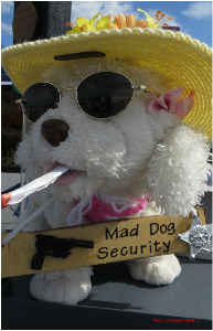 Security Dog Poster