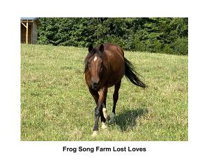Frog Song Farm Sanctuary Memorial Calendar