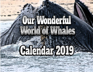 Our Wonderful World of Whales Calendar 2019