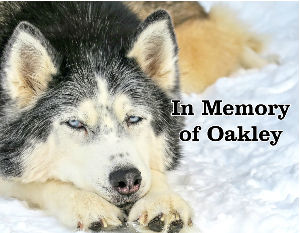 In Memory of Oakley