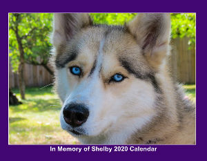 Shelby the Husky Memory 2020 Calendar