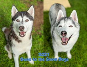 2021 Gone to the Snow Dogs Wall Calendar | Husky