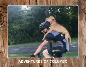 Adventures of Columbo 2019 Calendar