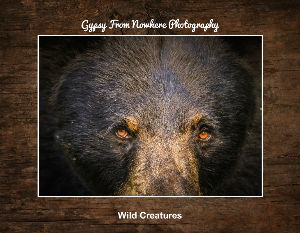 Gypsy From Nowhere  Photography Wildlife Calendar