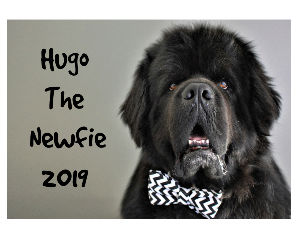 Hugo The Newfie 2019 Calendar