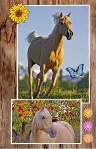 Palomino Horse Notebook