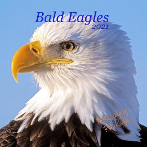Bald Eagles  Wall Calendar 2021
