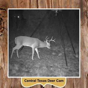 In The Woods Central Texas Deer Cam