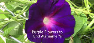 Purple Flowers to End Alzheimer's