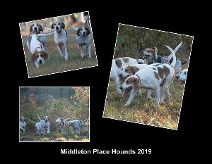 Middleton Place Hounds