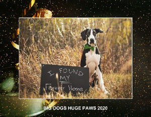 Big Dogs Huge Paws 2020 Calendar