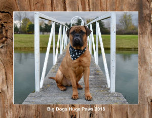Big Dogs Huge Paws 2018 Calendar