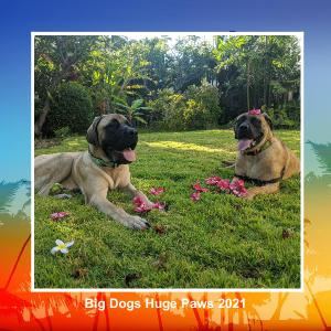 Big Dogs Huge Paws Calendar 2021