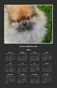 Wookie of My Pom Pals 2019 Poster Calendar