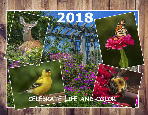 Backyard Birds 2018 Calendar: Life and Colors