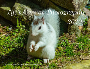 Lifes Canvas Photography - Annual Calendar 2020