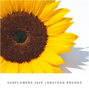 SUNFLOWERS 2019 JONATHAN BROOKS