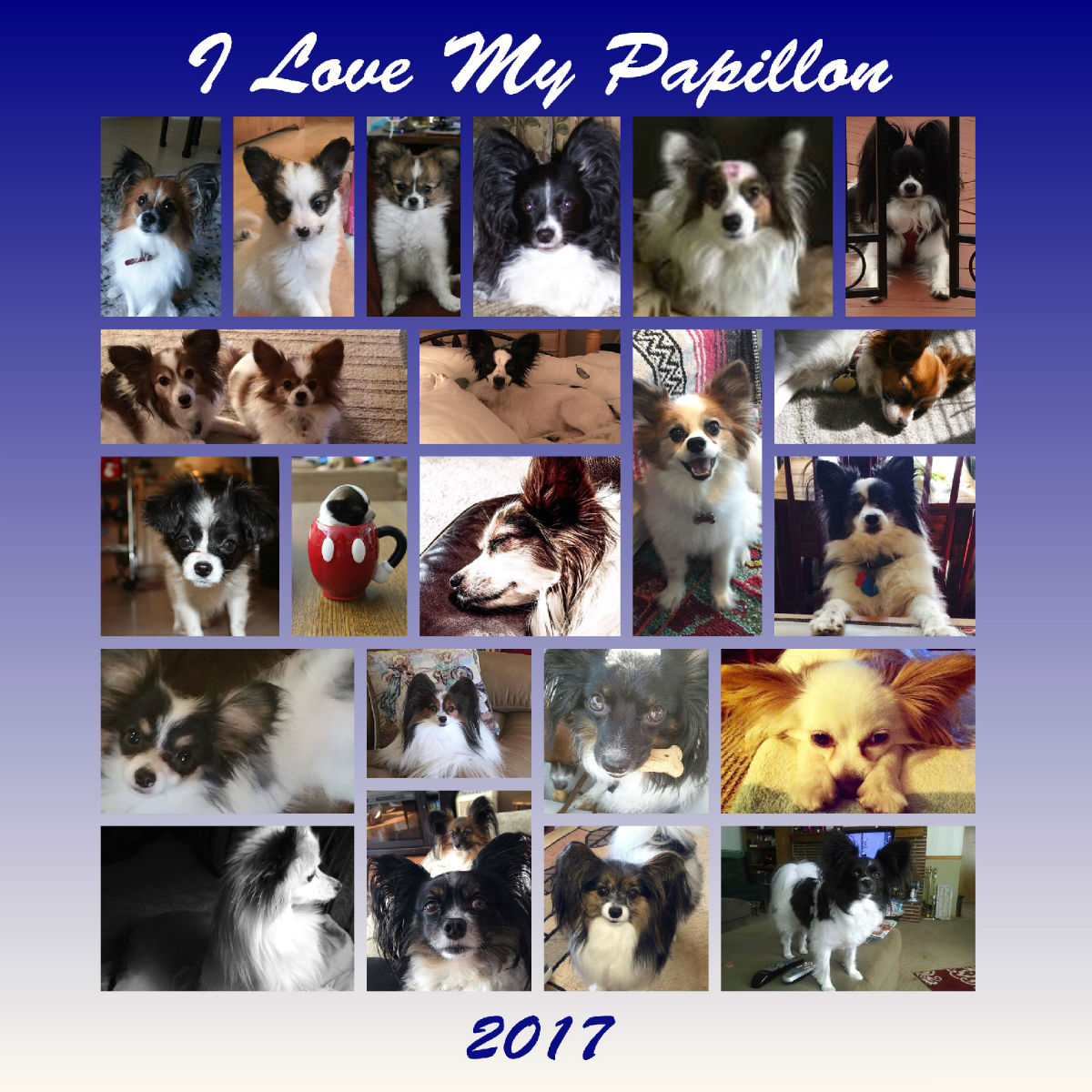I Love My Papillon 2017