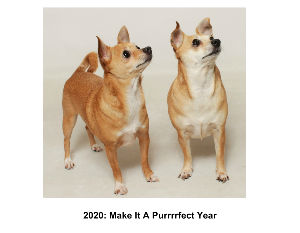 2020: Make It A Purrrrfect Year
