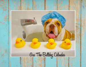 Gus The Bulldog Calendar