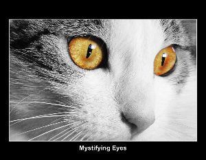 Mystifying Eyes Calendar