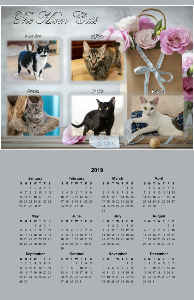 The 2018 Mom Cats Poster Calendar