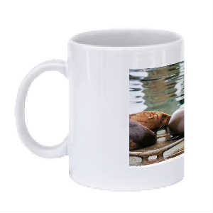 Seal Life Coffee Mug