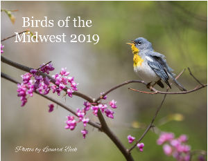 Birds of the Midwest 2019