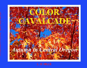 Color Cavalcade