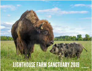 Lighthouse Farm Sanctuary 2019