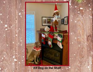 Elf Dog on the Shelf