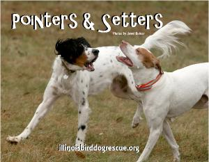 Pointers & Setters